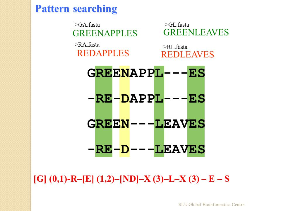 Pattern searching GREENAPPL---ES -RE-DAPPL---ES GREEN---LEAVES -RE-D---LEAVES GREENAPPLES >GA.fasta GREENLEAVES >GL.fasta REDAPPLES >RA.fasta REDLEAVES >RL.fasta [G] (0,1)-R–[E] (1,2)–[ND]–X (3)–L–X (3) – E – S SLU Global Bioinformatics Centre