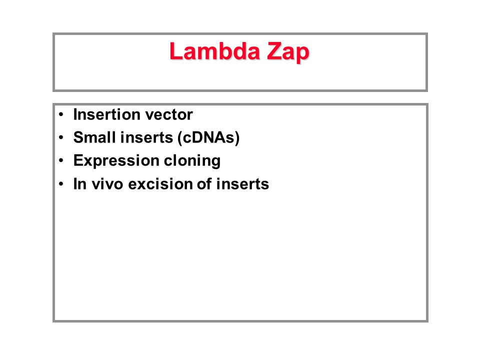 Insertion vector Small inserts (cDNAs) Expression cloning In vivo excision of inserts Lambda Zap