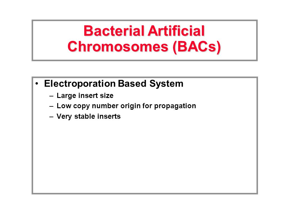 Electroporation Based System –Large insert size –Low copy number origin for propagation –Very stable inserts Bacterial Artificial Chromosomes (BACs)