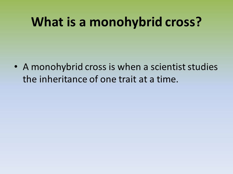 What is a monohybrid cross.