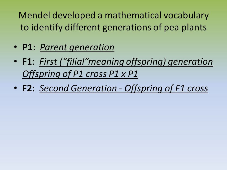 Mendel developed a mathematical vocabulary to identify different generations of pea plants P1: Parent generation F1: First ( filial meaning offspring) generation Offspring of P1 cross P1 x P1 F2: Second Generation - Offspring of F1 cross