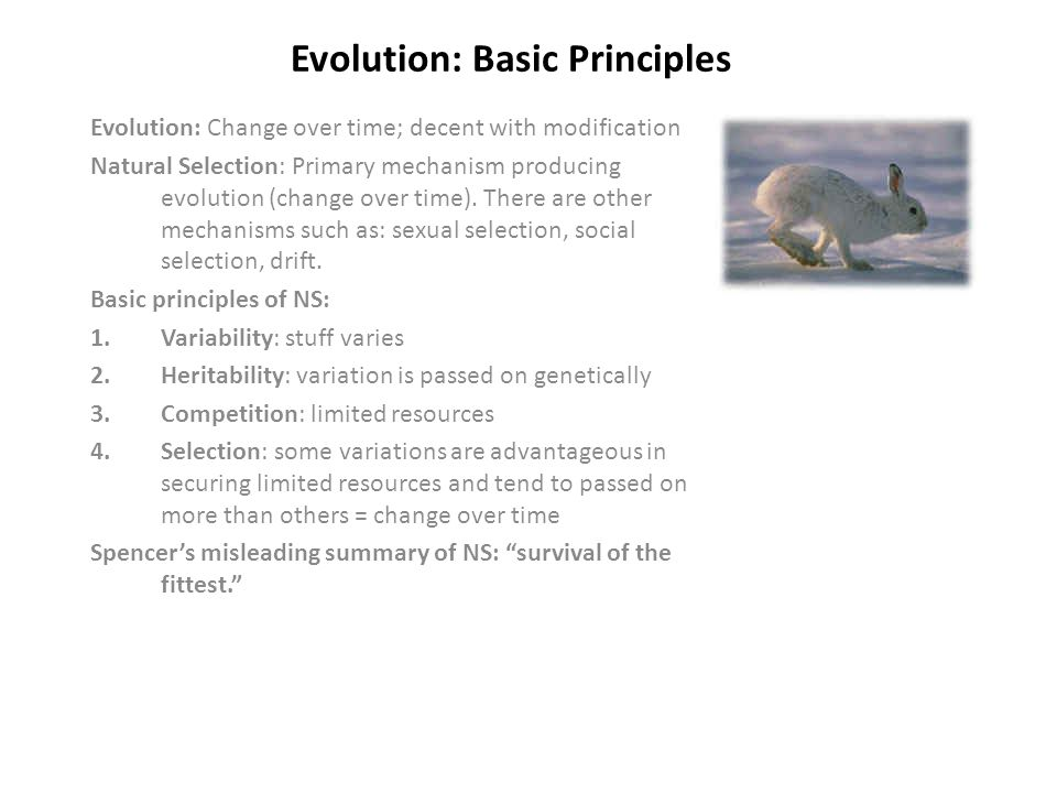 Evolution: Basic Principles Evolution: Change over time; decent with modification Natural Selection: Primary mechanism producing evolution (change over time).