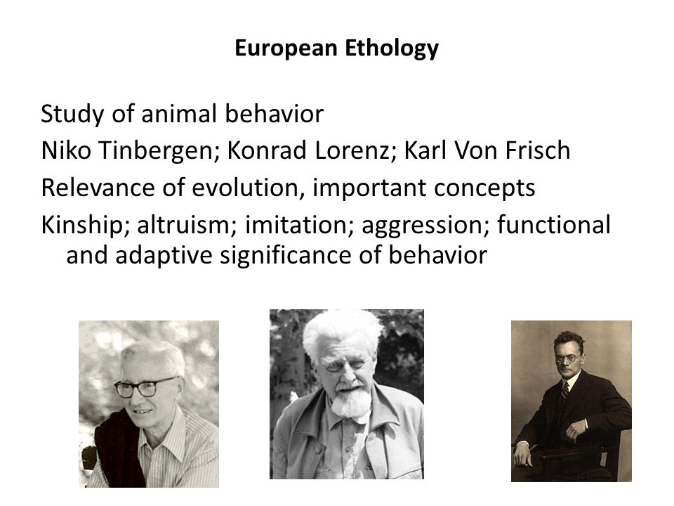 European Ethology Study of animal behavior Niko Tinbergen; Konrad Lorenz; Karl Von Frisch Relevance of evolution, important concepts Kinship; altruism; imitation; aggression; functional and adaptive significance of behavior