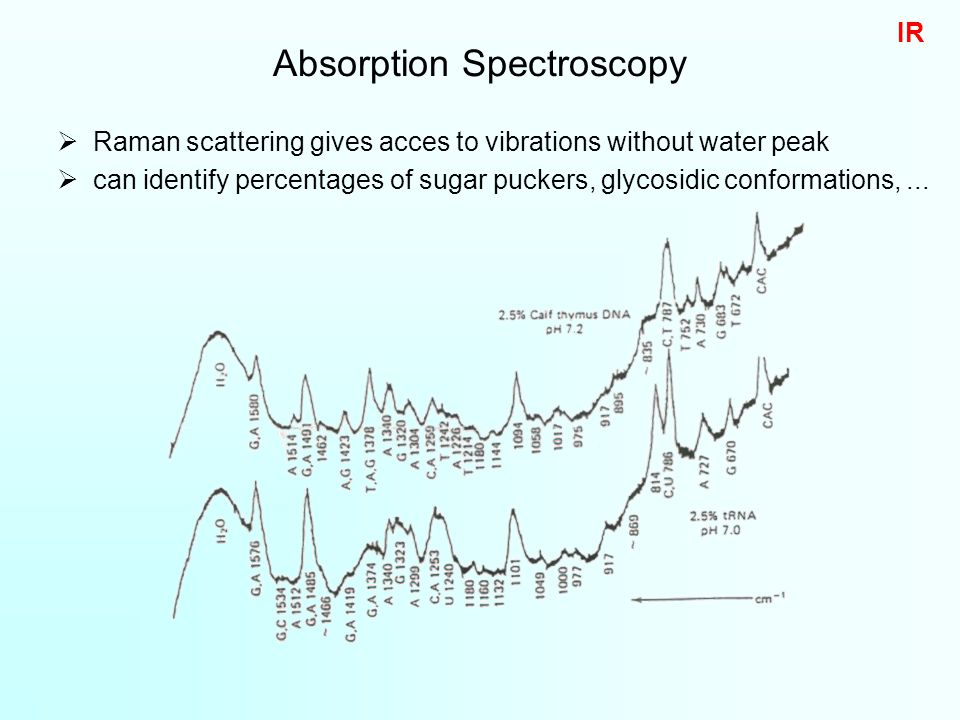  Raman scattering gives acces to vibrations without water peak  can identify percentages of sugar puckers, glycosidic conformations,...