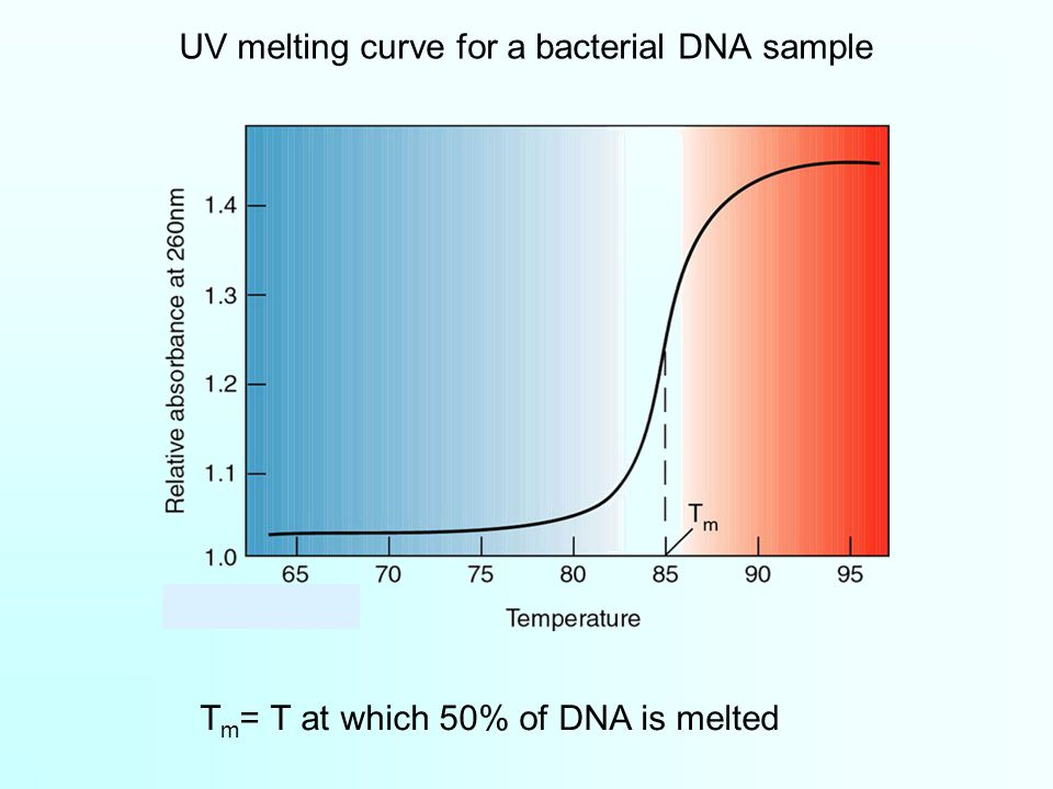 UV melting curve for a bacterial DNA sample T m = T at which 50% of DNA is melted