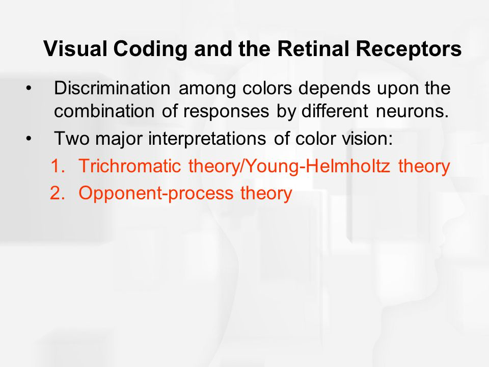 Visual Coding and the Retinal Receptors Discrimination among colors depends upon the combination of responses by different neurons.