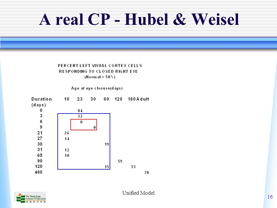 Unified Model 16 A real CP - Hubel & Weisel