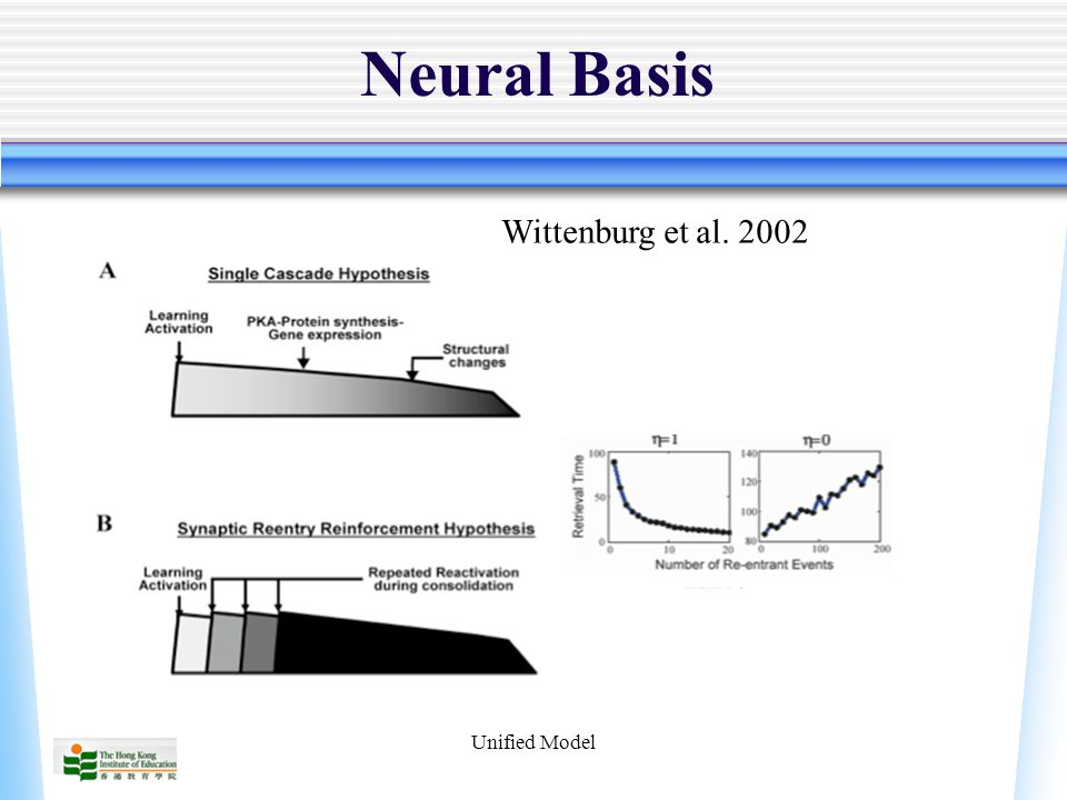 Unified Model Neural Basis Wittenburg et al. 2002