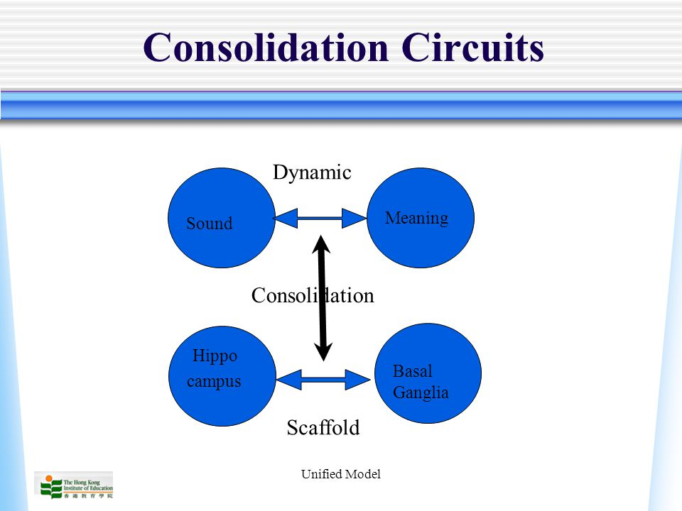 Unified Model Consolidation Circuits Sound Meaning Basal Ganglia Hippo campus Dynamic Scaffold Consolidation