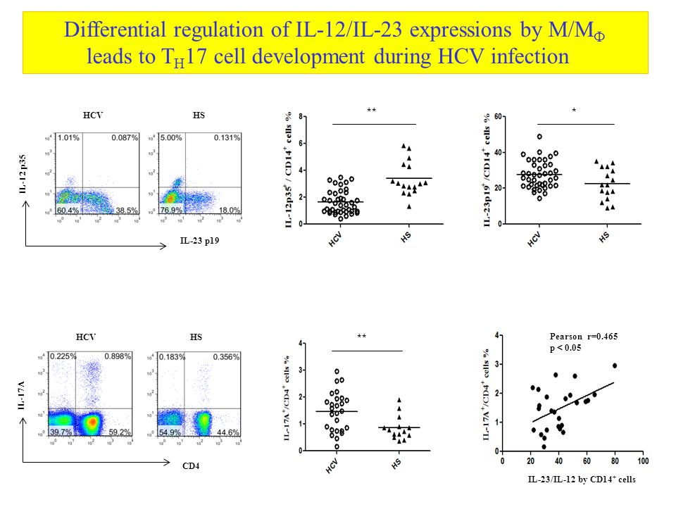 Differential regulation of IL-12/IL-23 expressions by M/M Ф leads to T H 17 cell development during HCV infection IL-23 p19 IL-12 p35 HCV HS ** * CD4 IL-17A HCV HS ** Pearson r=0.465 p < 0.05 IL-23/IL-12 by CD14 + cells