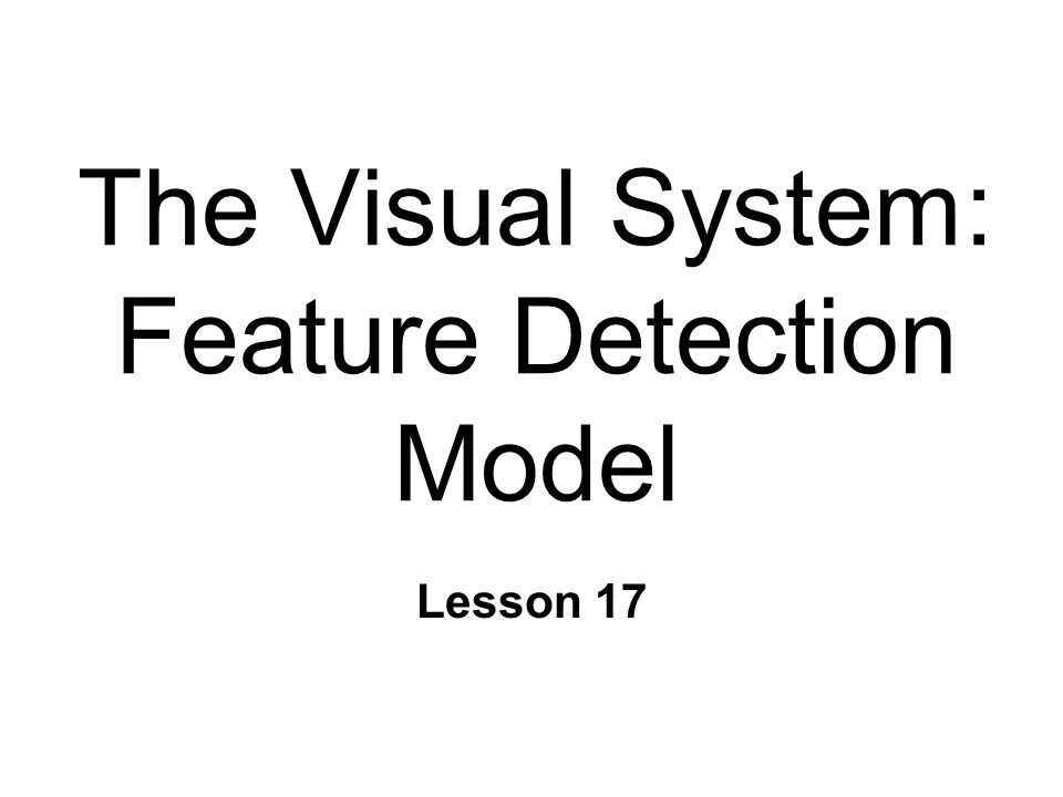 The Visual System: Feature Detection Model Lesson 17