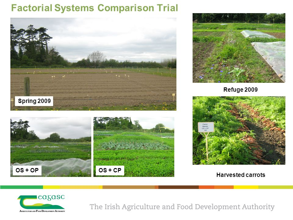 Factorial Systems Comparison Trial Spring 2009 OS + OPOS + CP Refuge 2009 Harvested carrots