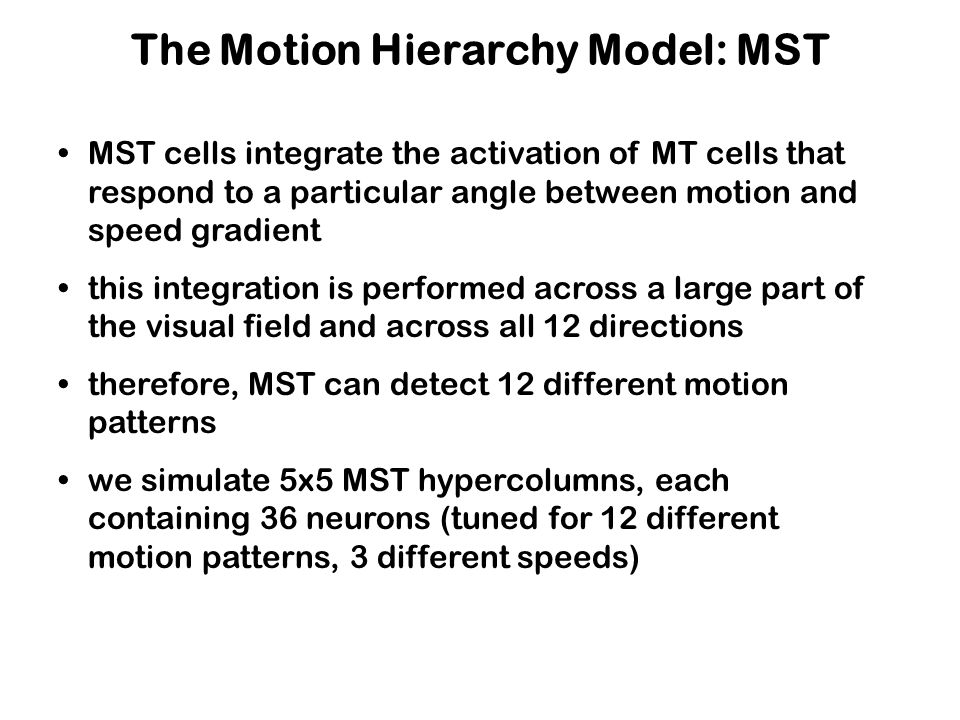 The Motion Hierarchy Model: MST MST cells integrate the activation of MT cells that respond to a particular angle between motion and speed gradient this integration is performed across a large part of the visual field and across all 12 directions therefore, MST can detect 12 different motion patterns we simulate 5x5 MST hypercolumns, each containing 36 neurons (tuned for 12 different motion patterns, 3 different speeds)