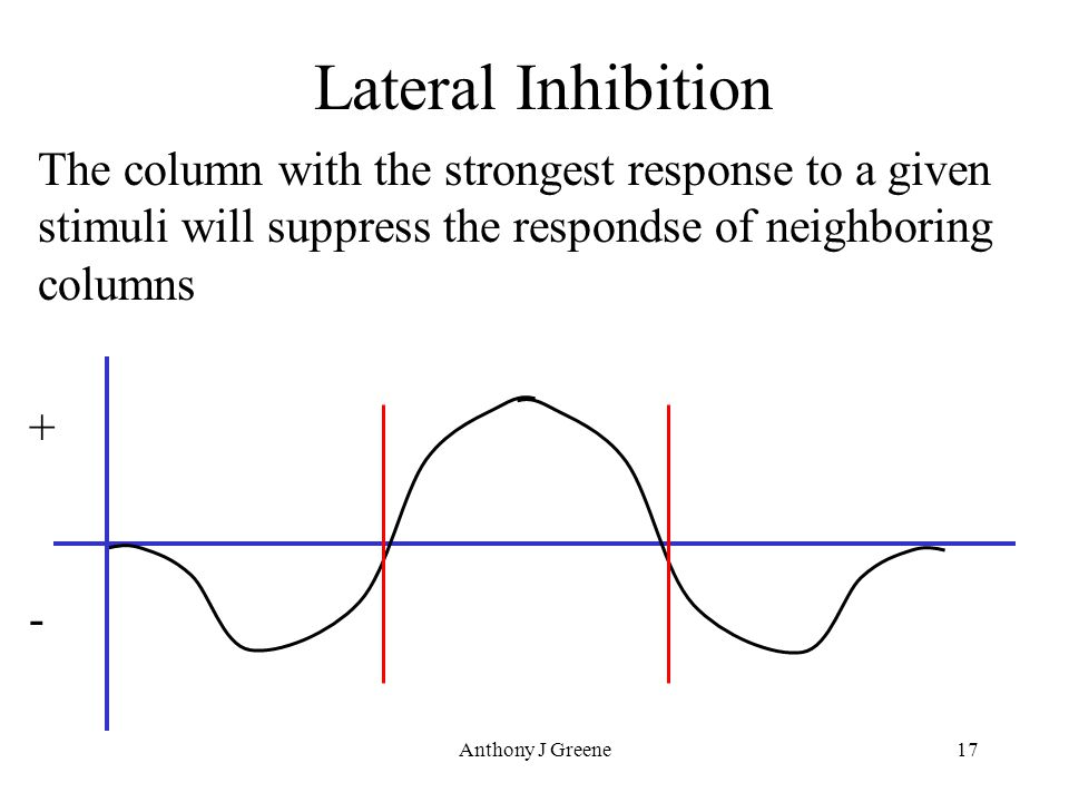 Anthony J Greene17 Lateral Inhibition The column with the strongest response to a given stimuli will suppress the respondse of neighboring columns + -