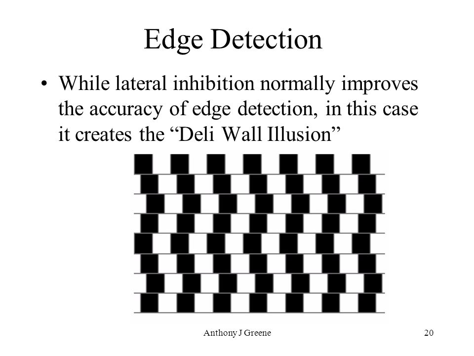 Anthony J Greene20 Edge Detection While lateral inhibition normally improves the accuracy of edge detection, in this case it creates the Deli Wall Illusion