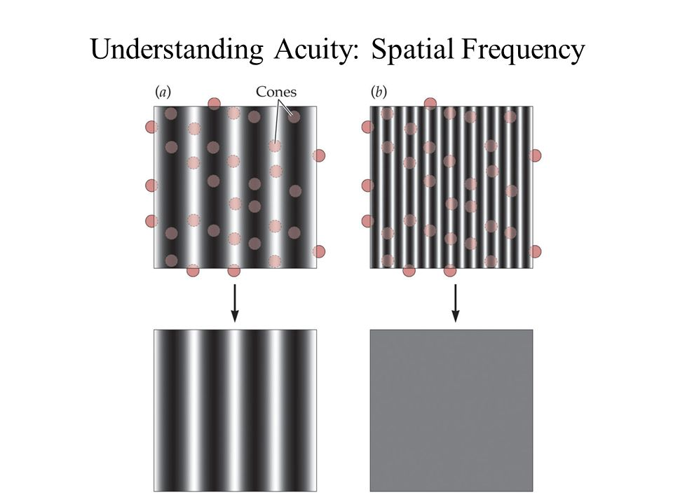 Anthony J Greene23 Understanding Acuity: Spatial Frequency