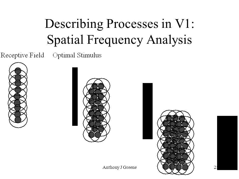 Anthony J Greene25 Describing Processes in V1: Spatial Frequency Analysis