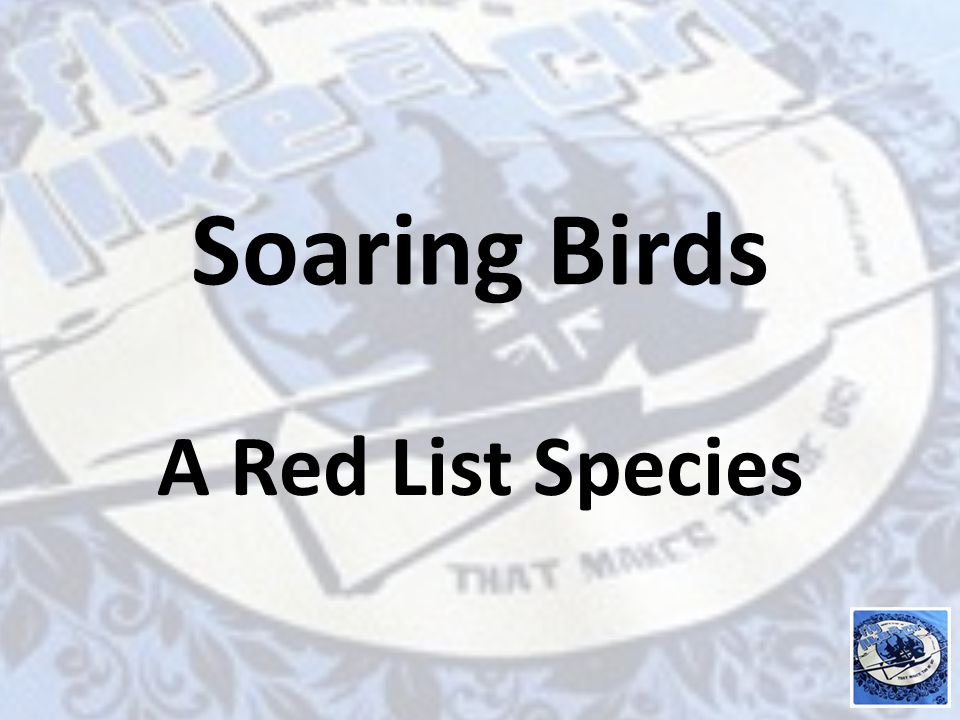 Soaring Birds A Red List Species