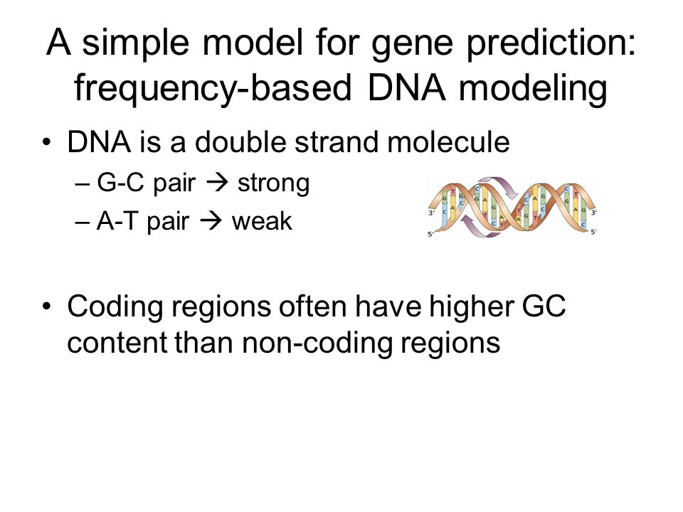 A simple model for gene prediction: frequency-based DNA modeling DNA is a double strand molecule –G-C pair  strong –A-T pair  weak Coding regions often have higher GC content than non-coding regions