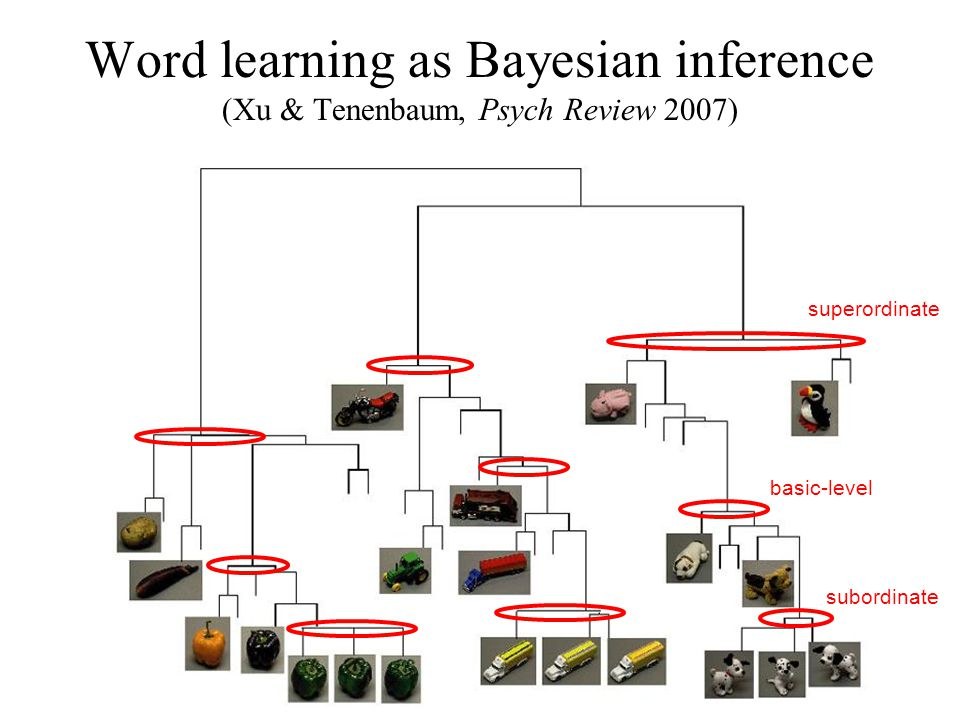 Word learning as Bayesian inference (Xu & Tenenbaum, Psych Review 2007) superordinate basic-level subordinate