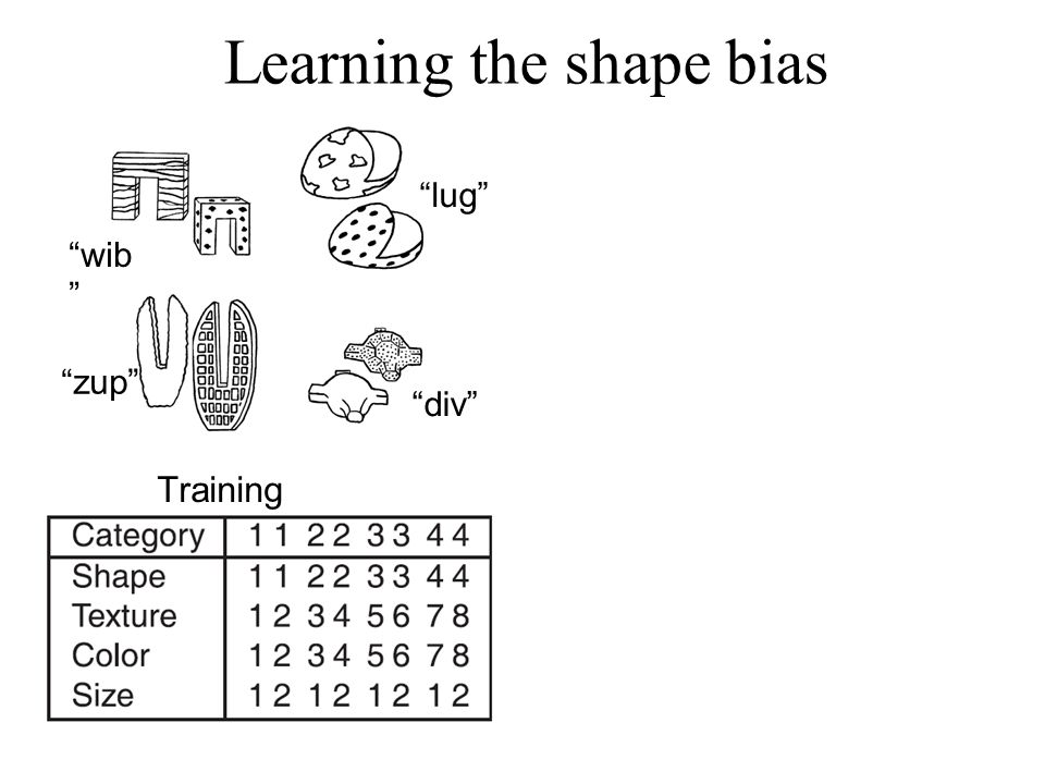 Learning the shape bias wib lug zup div Training