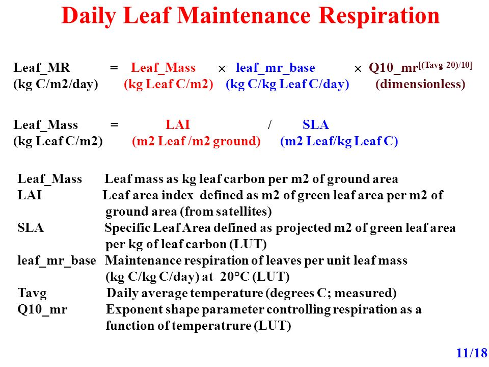 Daily Leaf Maintenance Respiration 11/18 Leaf_MR = Leaf_Mass  leaf_mr_base  Q10_mr [(Tavg-20)/10] (kg C/m2/day) (kg Leaf C/m2) (kg C/kg Leaf C/day) (dimensionless) Leaf_Mass = LAI / SLA (kg Leaf C/m2) (m2 Leaf /m2 ground) (m2 Leaf/kg Leaf C) Leaf_Mass Leaf mass as kg leaf carbon per m2 of ground area LAI Leaf area index defined as m2 of green leaf area per m2 of ground area (from satellites) SLA Specific Leaf Area defined as projected m2 of green leaf area per kg of leaf carbon (LUT) leaf_mr_base Maintenance respiration of leaves per unit leaf mass (kg C/kg C/day) at 20°C (LUT) Tavg Daily average temperature (degrees C; measured) Q10_mr Exponent shape parameter controlling respiration as a function of temperatrure (LUT)