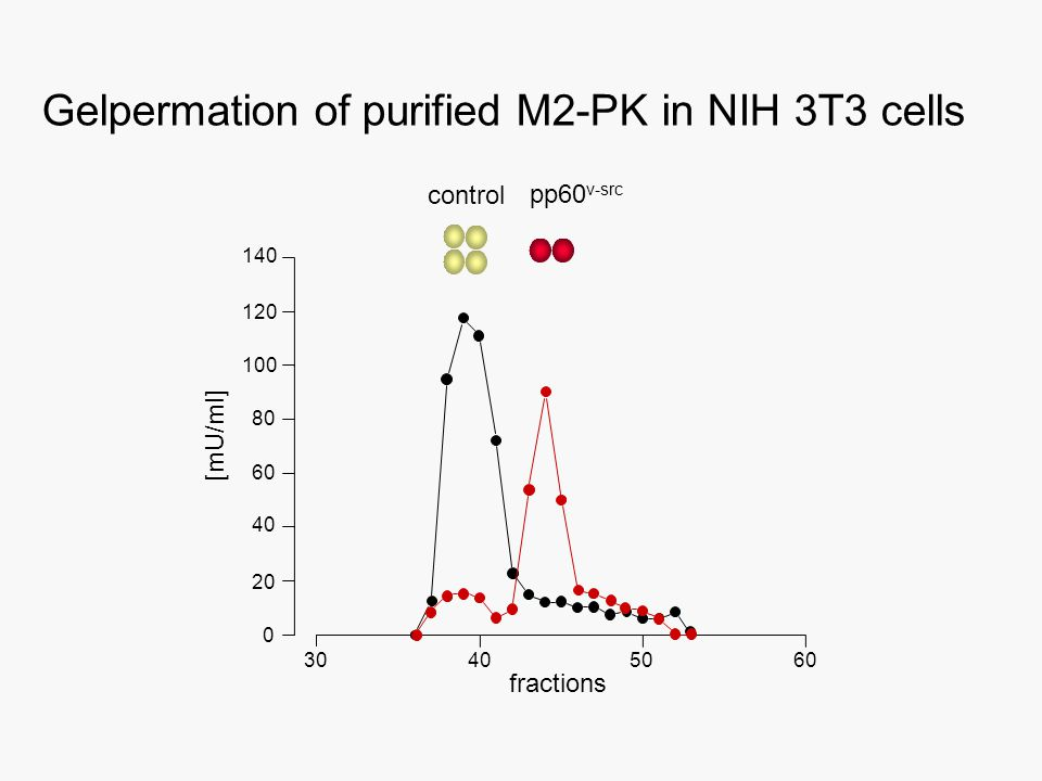 Gelpermation of purified M2-PK in NIH 3T3 cells control pp60 v-src 30405060 0 20 40 60 80 100 120 140 fractions [mU/ml]