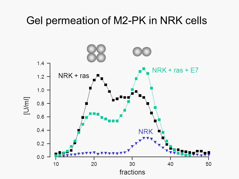 0.0 0.2 0.4 0.6 0.8 1.0 1.2 1.4 10 fractions Gel permeation of M2-PK in NRK cells NRK 30204050 [U/ml] NRK + ras NRK + ras + E7