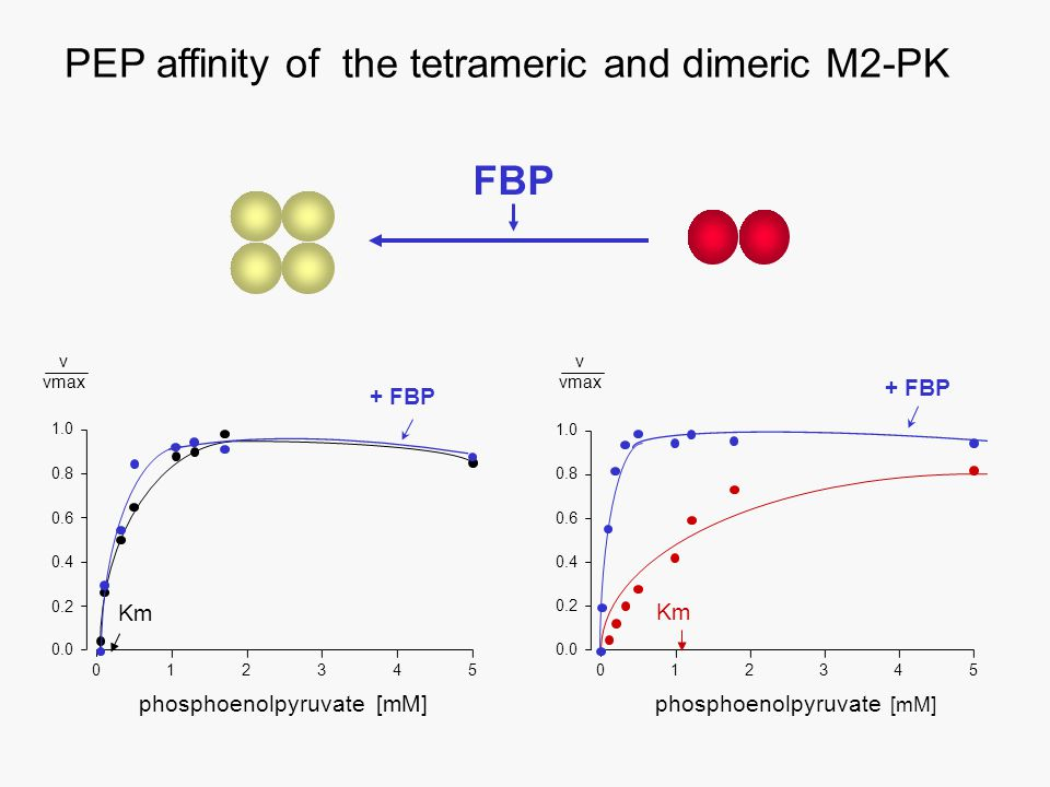 PEP affinity of the tetrameric and dimeric M2-PK 0.0 0.2 0.4 0.6 0.8 1.0 012345 phosphoenolpyruvate [mM] v vmax 543210 phosphoenolpyruvate [mM] 0.2 0.4 0.6 0.8 1.0 0.0 Km + FBP FBP v vmax
