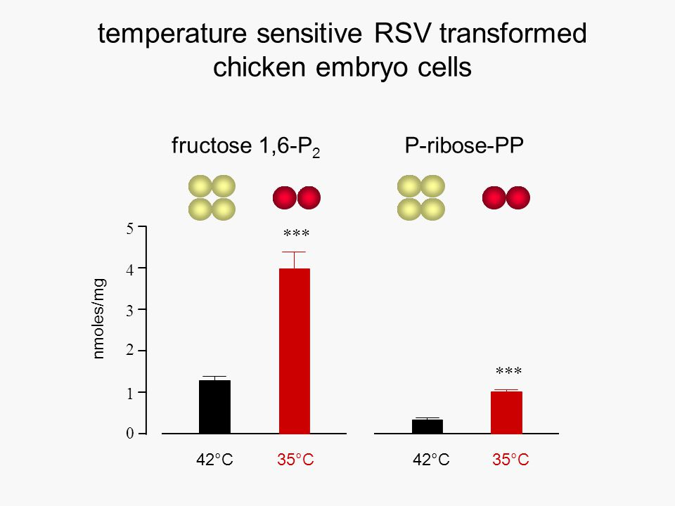 temperature sensitive RSV transformed chicken embryo cells 0 1 2 3 4 5 35°C42°C nmoles/mg *** fructose 1,6-P 2 42°C35°C P-ribose-PP ***