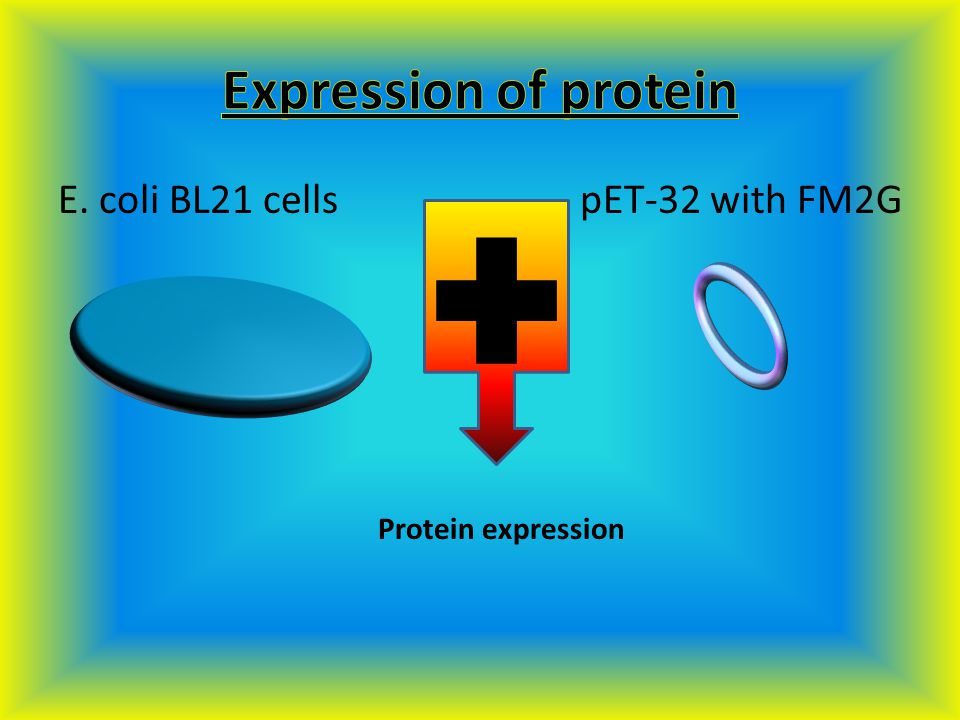 CLONING PROTEIN EXPRESSION PROTEIN PURIFICATION IMMUNIZATION
