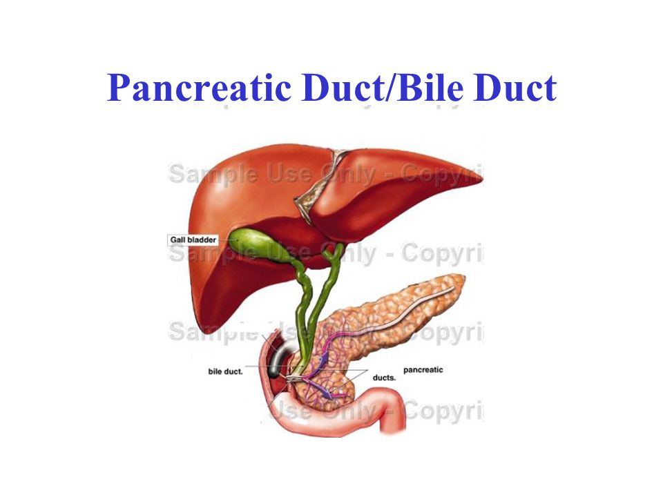 Pancreatic Duct/Bile Duct