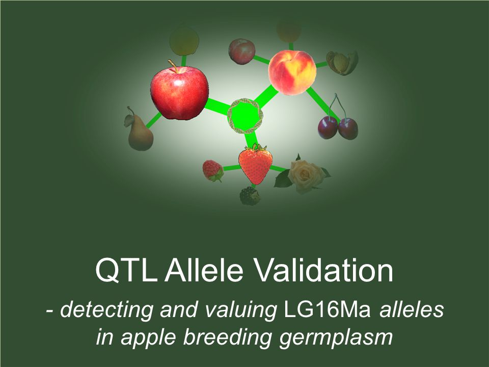 QTL Allele Validation - detecting and valuing LG16Ma alleles in apple breeding germplasm