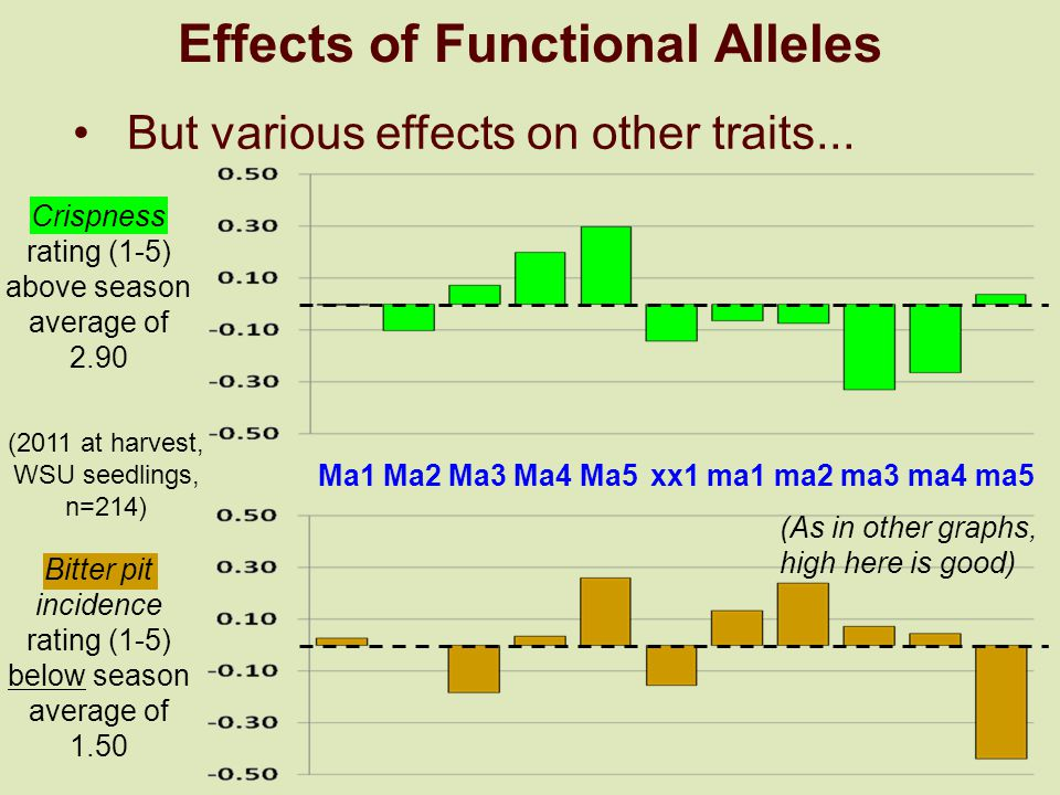 Effects of Functional Alleles Crispness rating (1-5) above season average of 2.90 (2011 at harvest, WSU seedlings, n=214) Bitter pit incidence rating (1-5) below season average of 1.50 Ma1 Ma2 Ma3 Ma4 Ma5ma1 ma2 ma3 ma4 ma5xx1 (As in other graphs, high here is good) But various effects on other traits...