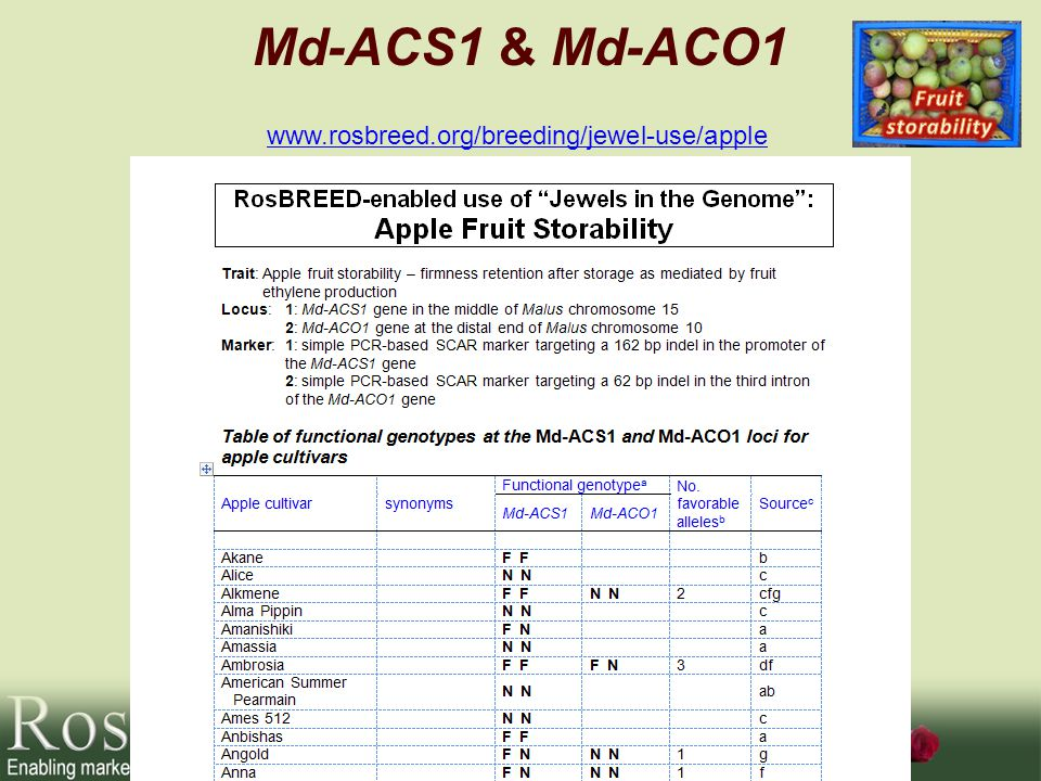 Md-ACS1 & Md-ACO1 www.rosbreed.org/breeding/jewel-use/apple