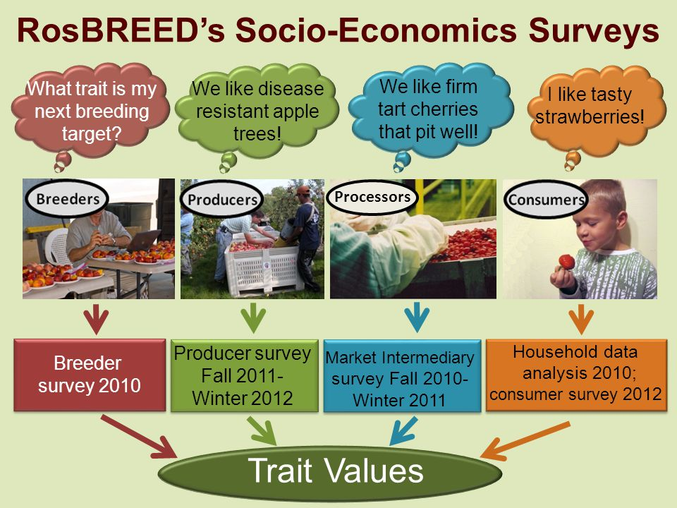 Trait Values Breeder survey 2010 Producer survey Fall 2011- Winter 2012 Market Intermediary survey Fall 2010- Winter 2011 Household data analysis 2010; consumer survey 2012 What trait is my next breeding target.