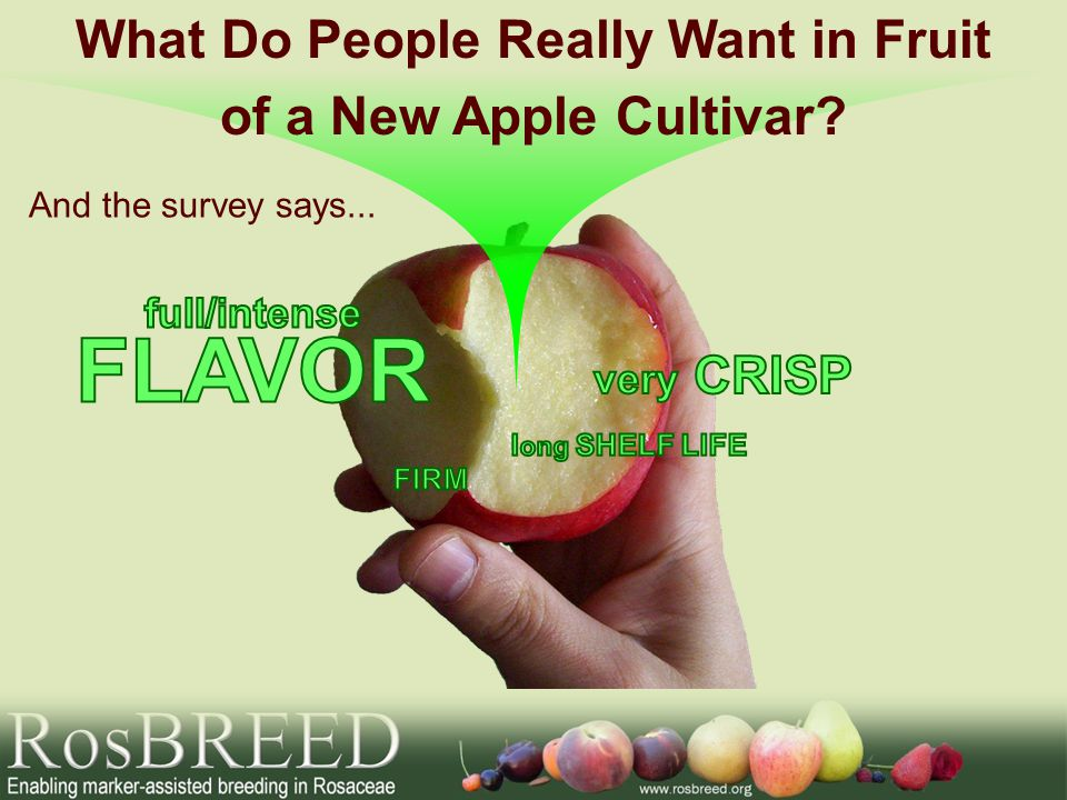 And the survey says... What Do People Really Want in Fruit of a New Apple Cultivar