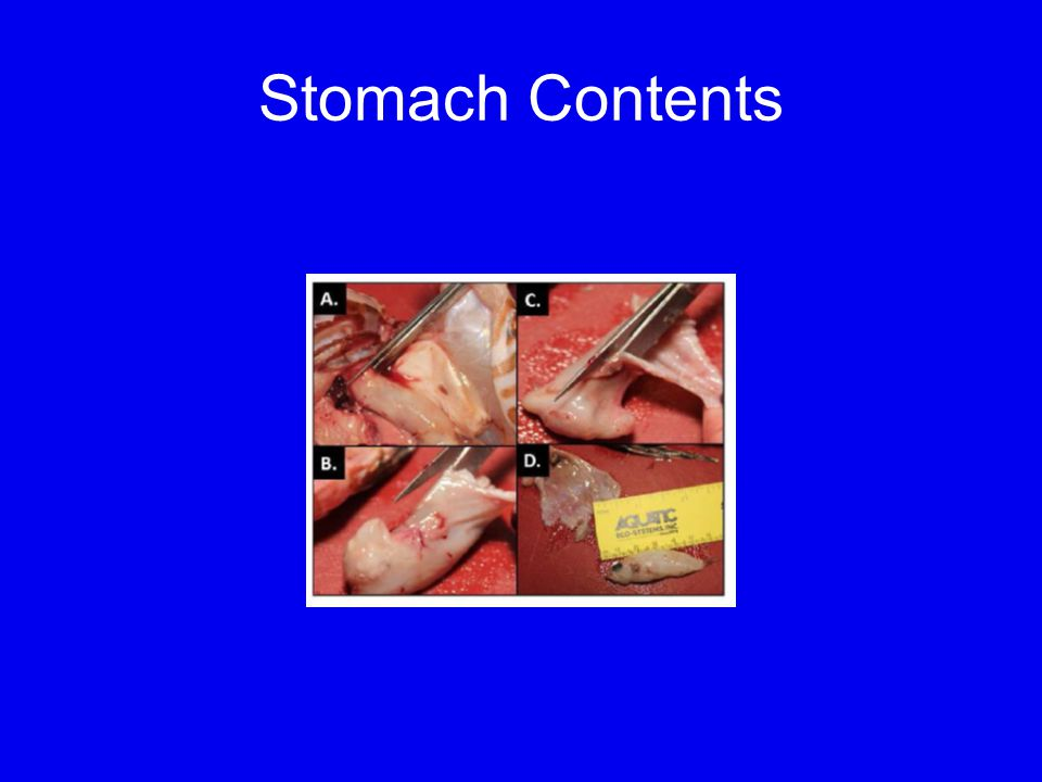 Stomach Contents