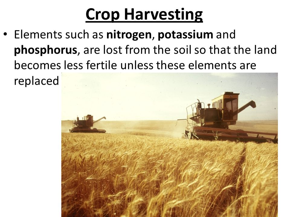 Crop Harvesting Elements such as nitrogen, potassium and phosphorus, are lost from the soil so that the land becomes less fertile unless these elements are replaced