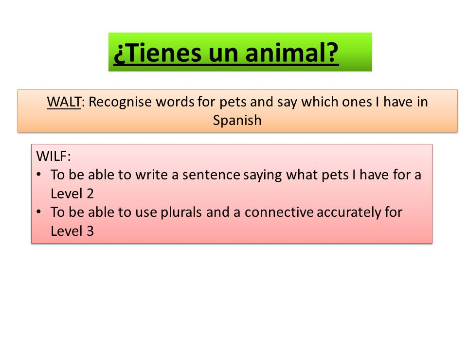 WALT: Recognise words for pets and say which ones I have in Spanish WILF: To be able to write a sentence saying what pets I have for a Level 2 To be able to use plurals and a connective accurately for Level 3 WILF: To be able to write a sentence saying what pets I have for a Level 2 To be able to use plurals and a connective accurately for Level 3 ¿Tienes un animal