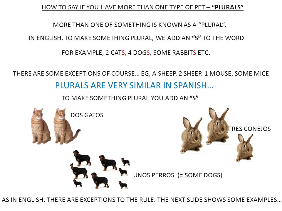 HOW TO SAY IF YOU HAVE MORE THAN ONE TYPE OF PET – PLURALS MORE THAN ONE OF SOMETHING IS KNOWN AS A PLURAL .