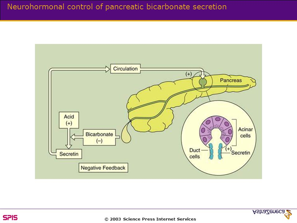 © 2003 Science Press Internet Services Neurohormonal control of pancreatic bicarbonate secretion
