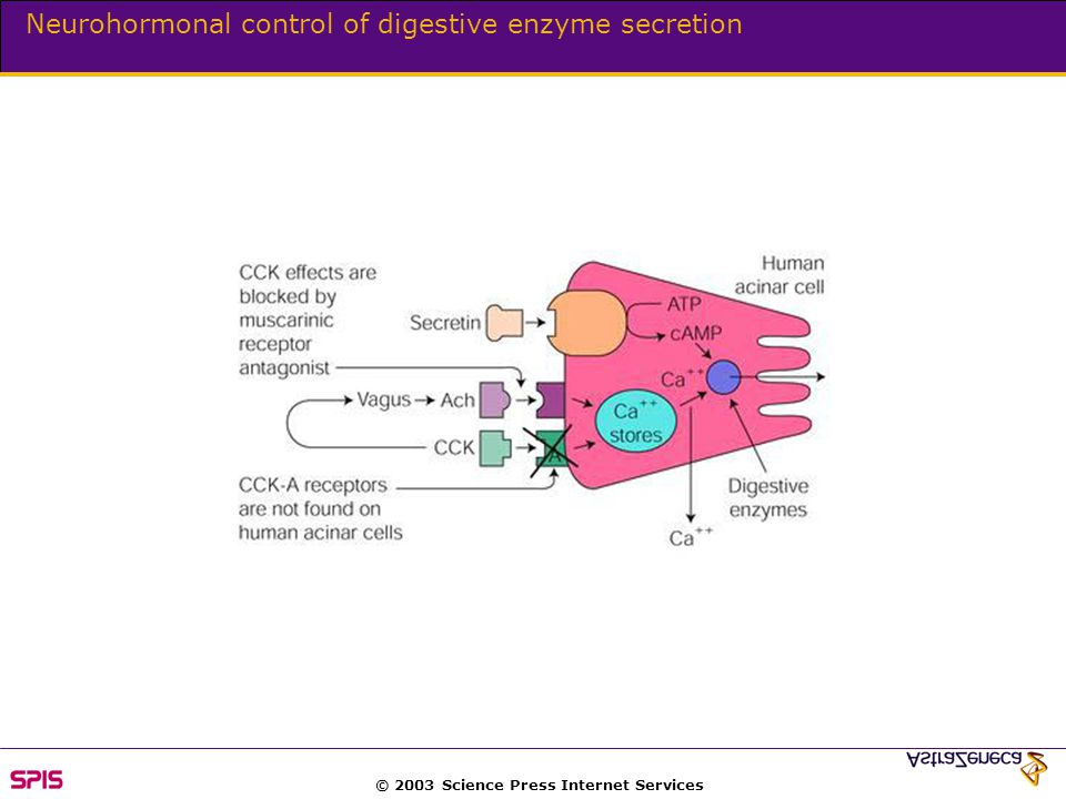 © 2003 Science Press Internet Services Neurohormonal control of digestive enzyme secretion