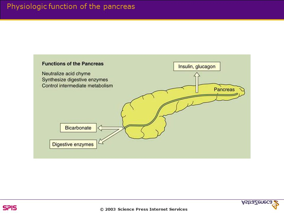 © 2003 Science Press Internet Services Physiologic function of the pancreas