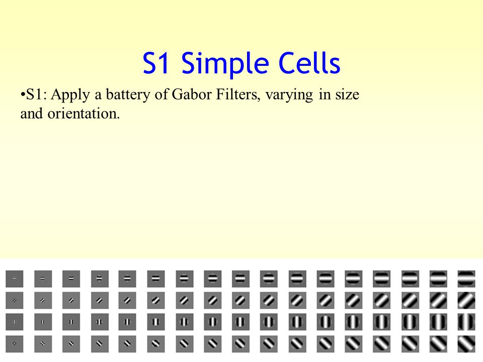 S1 Simple Cells S1: Apply a battery of Gabor Filters, varying in size and orientation.