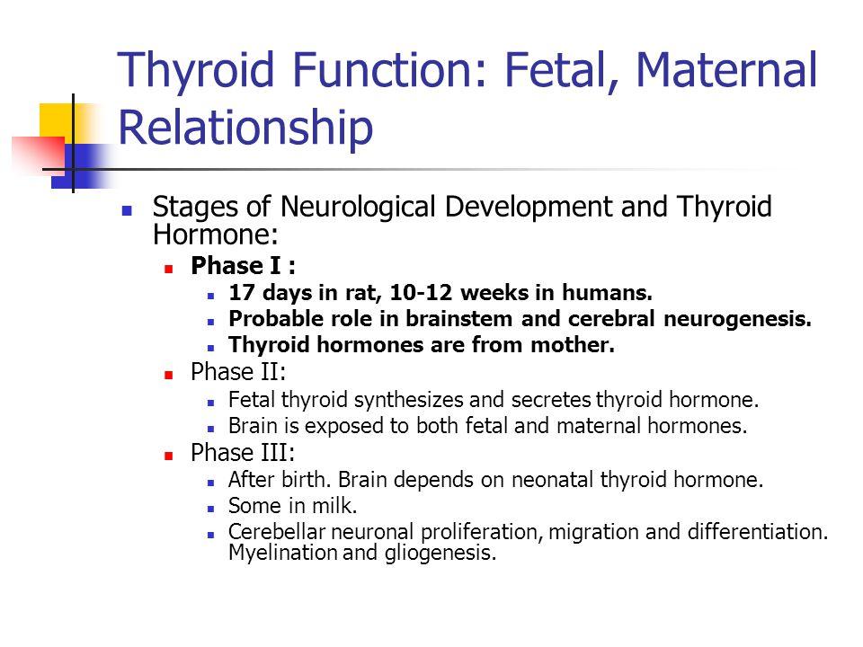 Thyroid Function Fetal Maternal Relationship Thyroid Function In