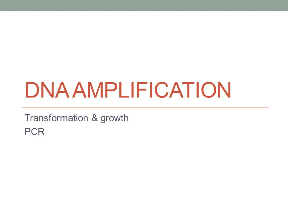 DNA AMPLIFICATION Transformation & growth PCR