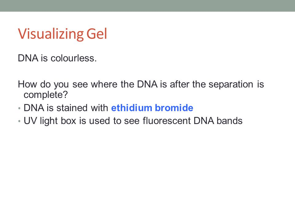 Visualizing Gel DNA is colourless.