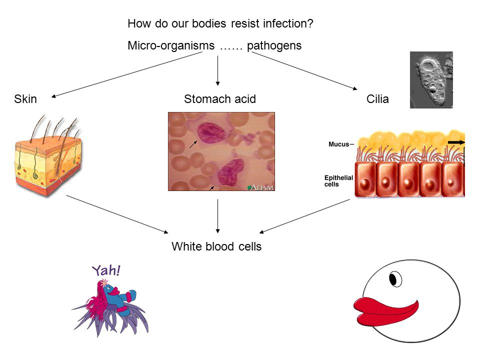 How do our bodies resist infection.