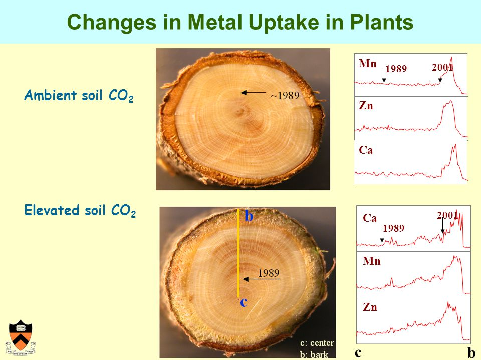Changes in Metal Uptake in Plants Elevated soil CO 2 Ca 1989 Zn Mn c b 2001 Ambient soil CO 2 Mn Zn Ca